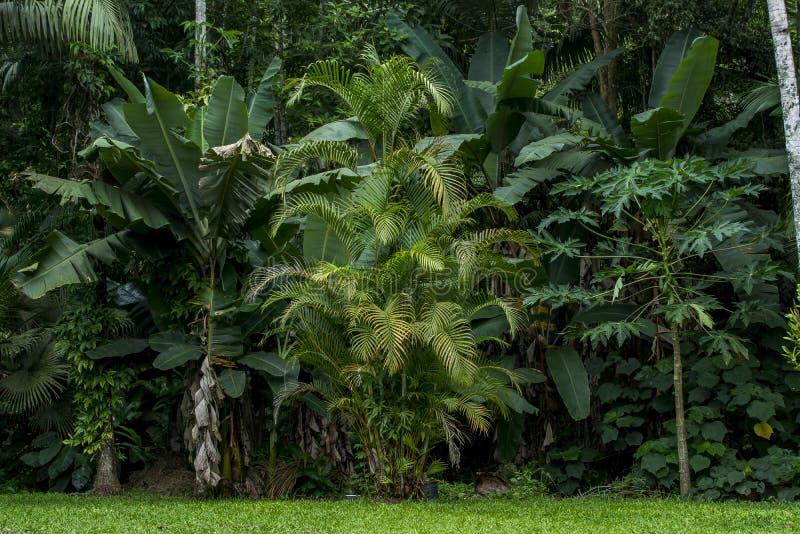 Tropikalny las deszczowy fotografia stock