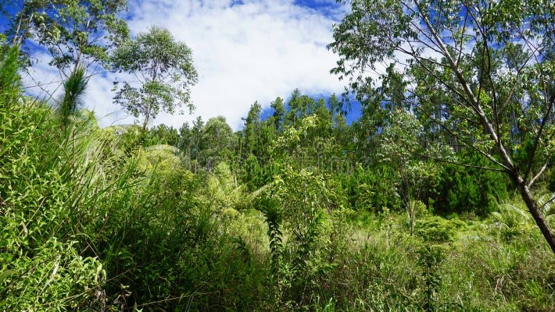 Tropikalny las deszczowy, Ella, Sri Lanka zdjęcia stock