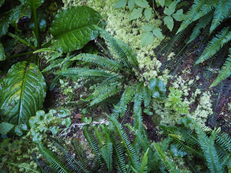 Tropikalny las deszczowy podłoga - cienie zieleń zdjęcie royalty free