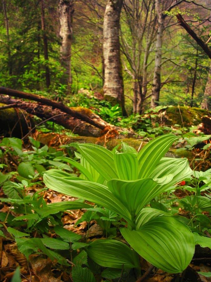 tropikalny las deszczowy roślinność obraz royalty free