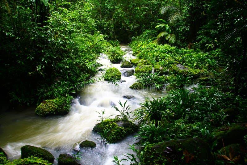 Tropikalny las deszczowy rzeka zdjęcie royalty free
