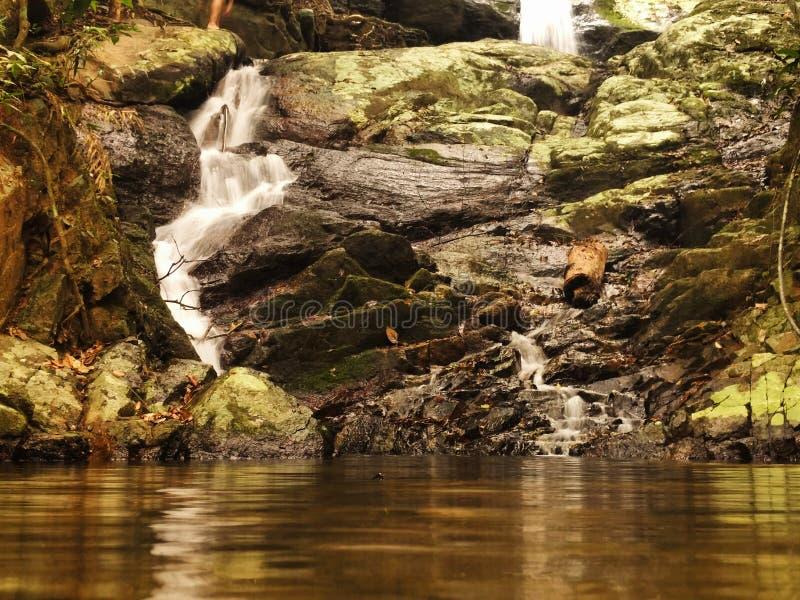 Tropikalny las deszczowy siklawa obrazy royalty free