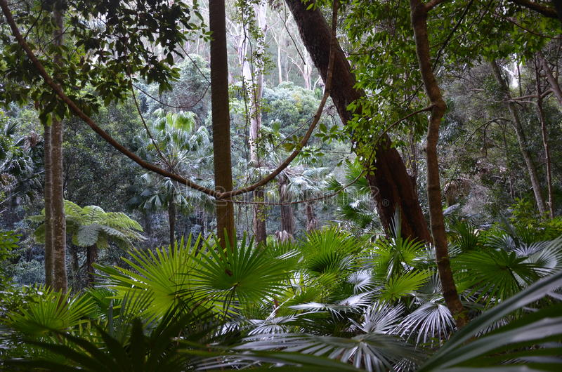 Tropikalny las deszczowy understory fotografia stock