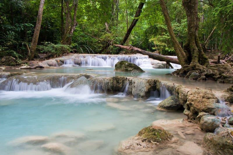 tropikalny lasowy strumień zdjęcie royalty free