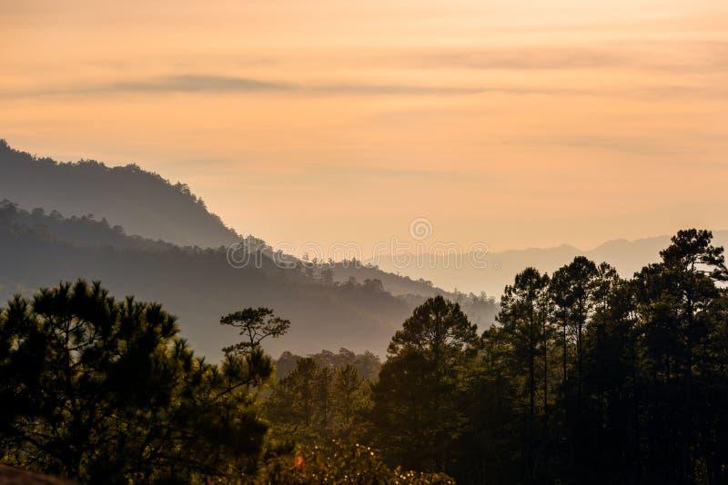 Tropikalny lasu tropikalnego zmierzch zdjęcie stock