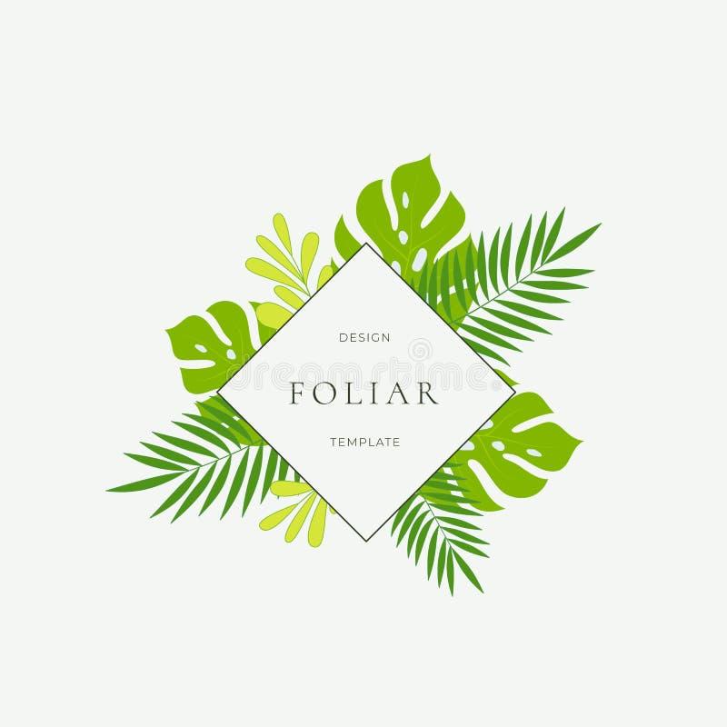 Tropikalny liść mody znak, karta lub loga szablon, Abstrakta Monstera Zielony ulistnienie z Rhombus granicą, Z klasą i ilustracja wektor