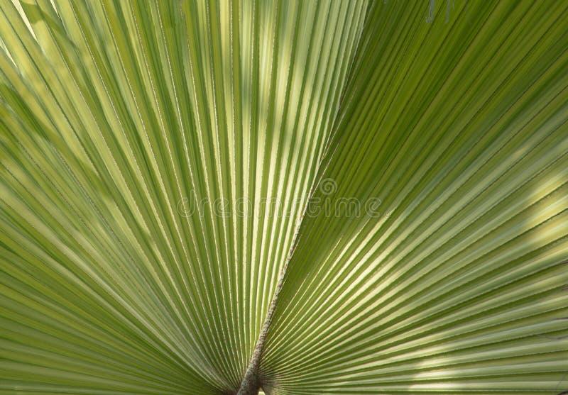 Tropikalny liścia fan obrazy stock