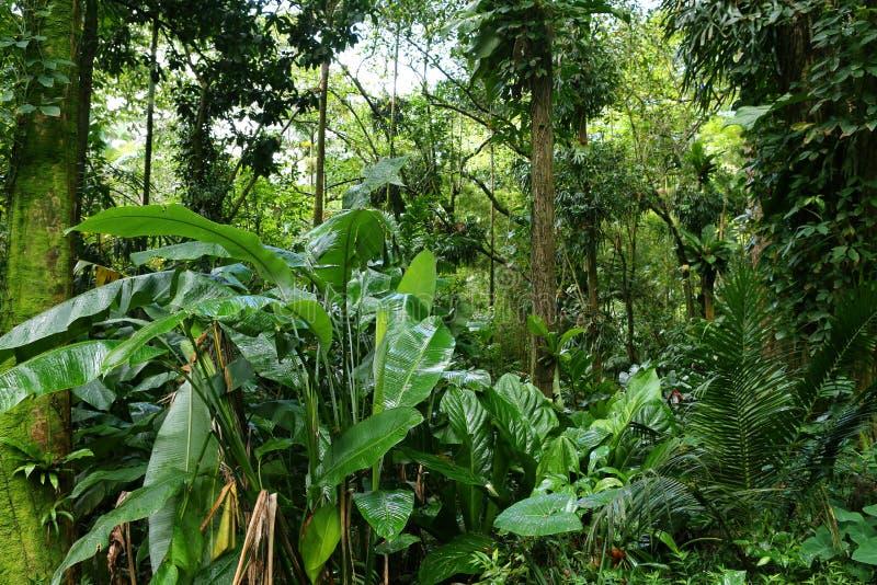 Tropikalny Luksusowy las tropikalny obrazy stock