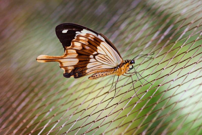Tropikalny motyl zdjęcia royalty free