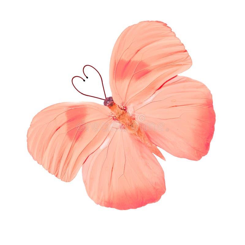 Tropikalny motyl z serce kształtnymi antenami pojedynczy białe tło fotografia stock