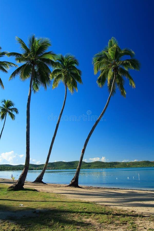 tropikalny niebieski obrazy royalty free