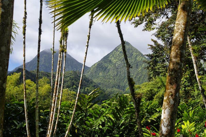 Tropikalny ogród Balata, Martinique zdjęcie royalty free
