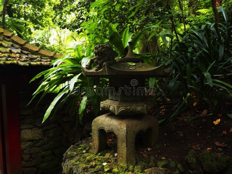 Tropikalny ogród przy Monte nad Funchal madera zdjęcie stock
