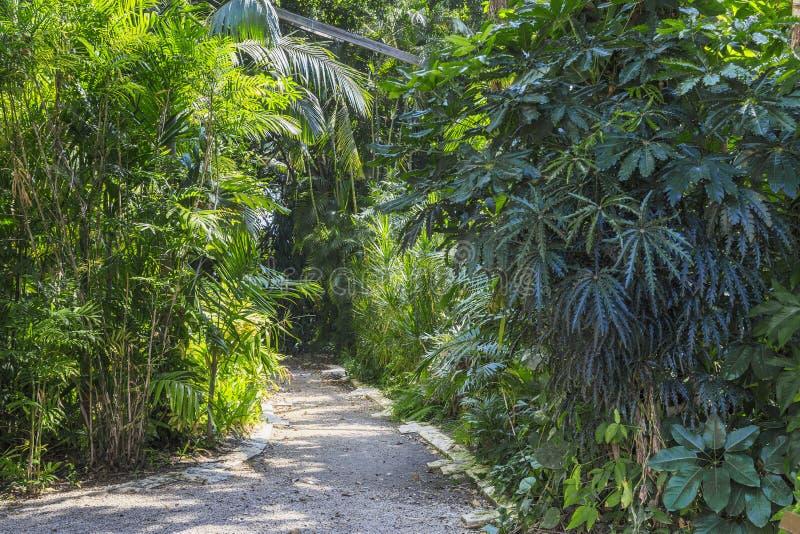 Tropikalny ogród w Tel Aviv obrazy stock
