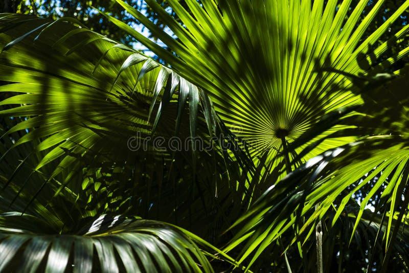 Tropikalny ogrodowy szczegół w salvador de bahia obrazy royalty free