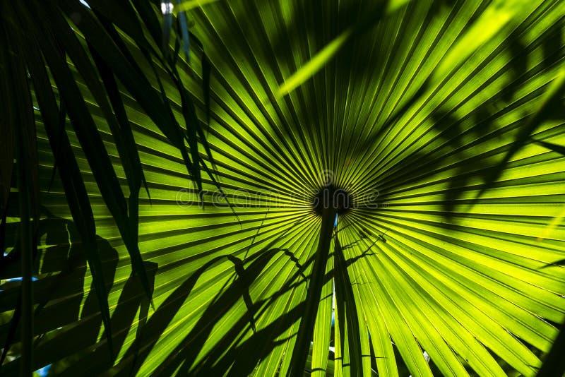 Tropikalny ogrodowy szczegół w salvador de bahia zdjęcie stock