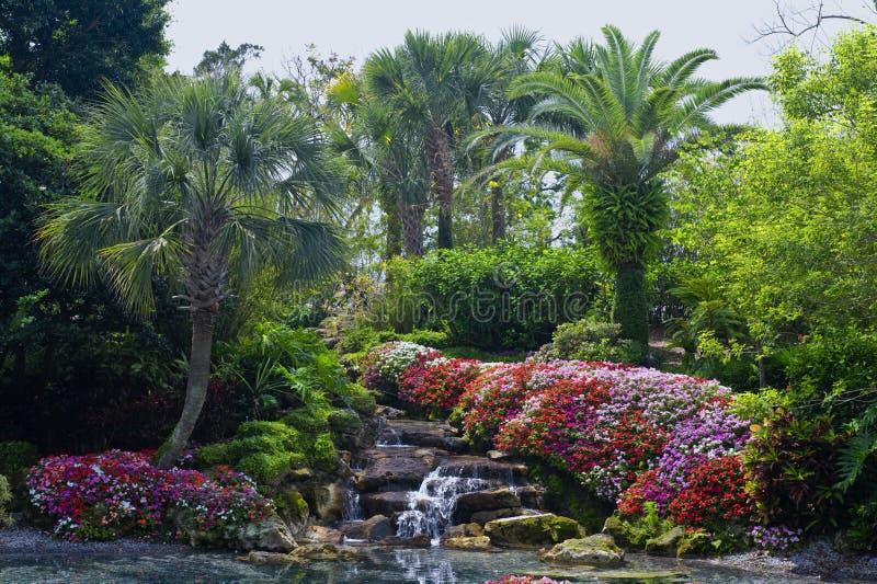 tropikalny ogrodu fotografia stock
