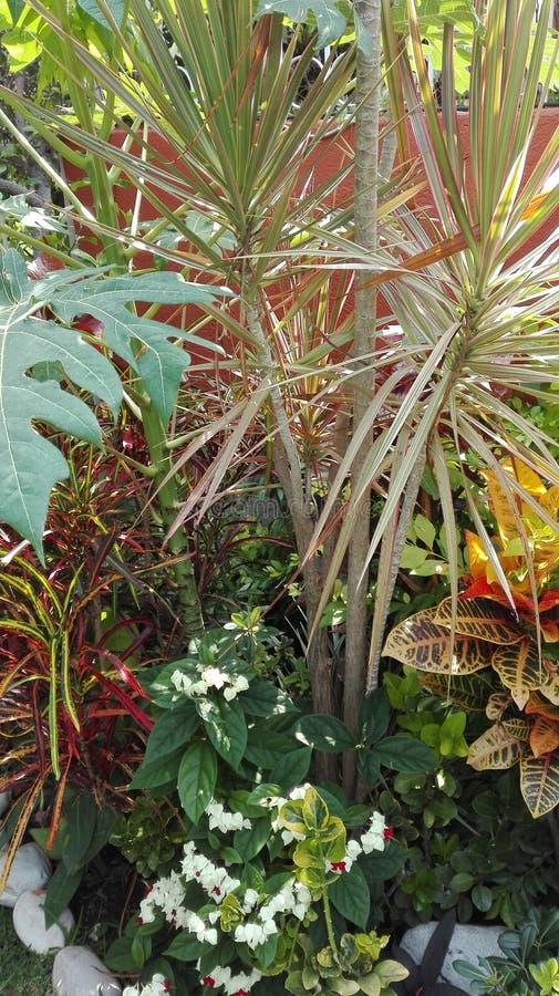 tropikalny ogrodu obrazy stock