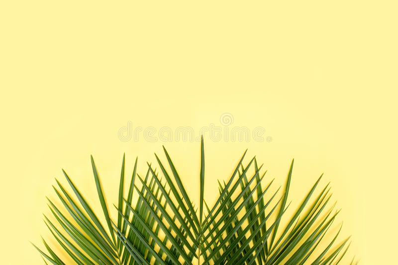 Tropikalny palmowy li?? na ? obrazy stock