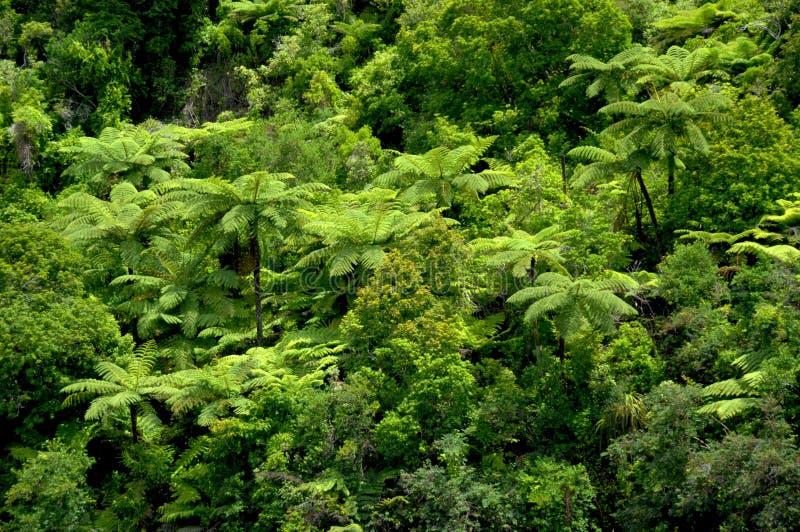 tropikalny paproci drzewo obraz stock