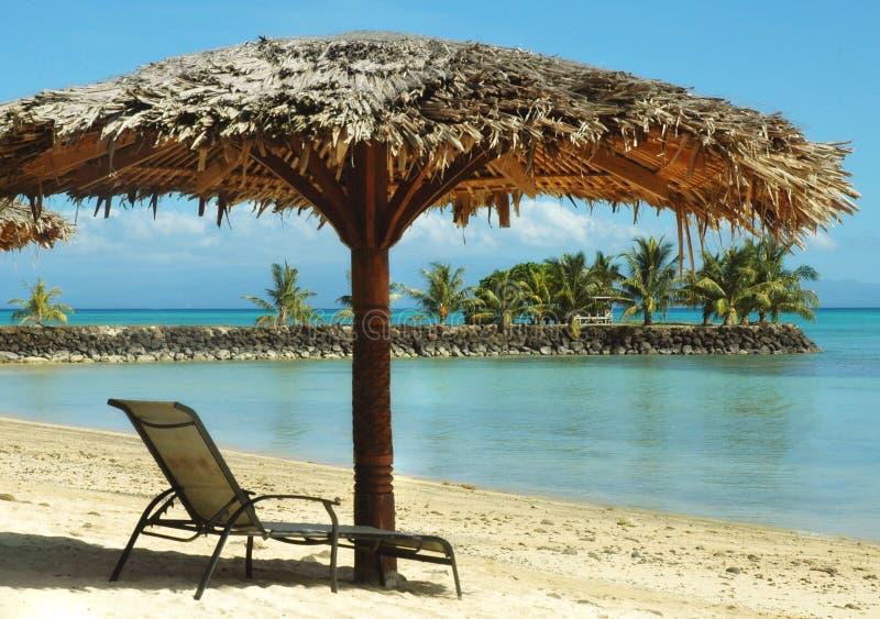 tropikalny parasol zdjęcia royalty free