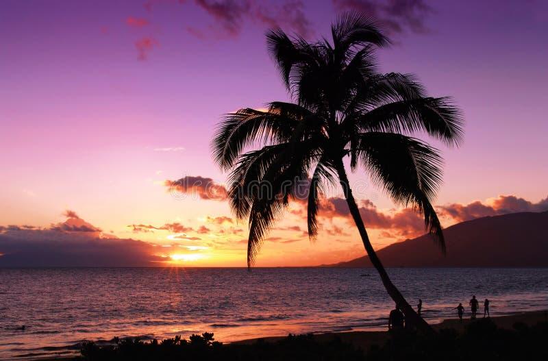 tropikalny piękny zachód słońca fotografia stock