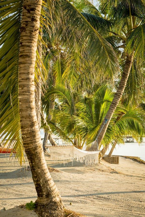 Tropikalny Plażowy hamak obraz royalty free