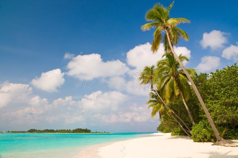 tropikalny plażowy lato obrazy royalty free