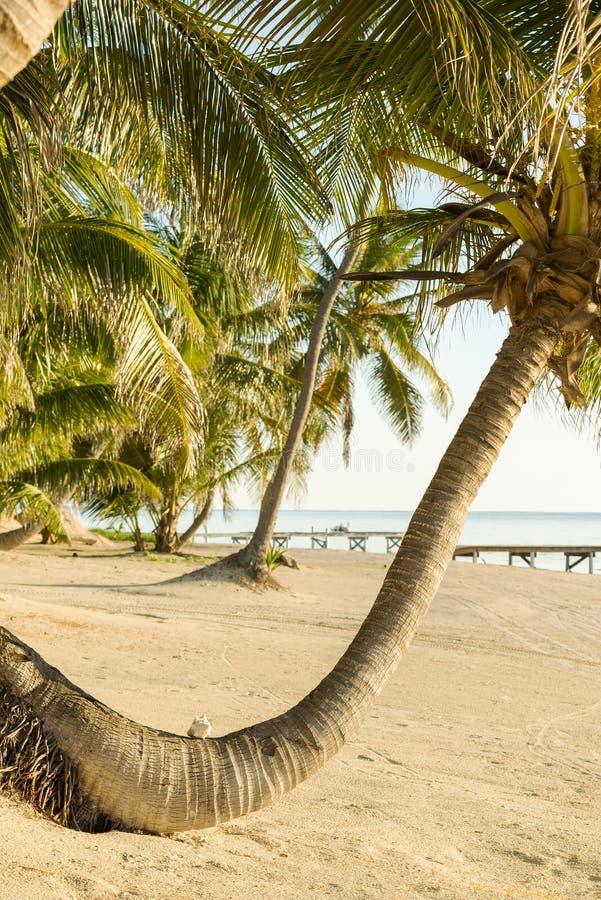 Tropikalny Plażowy Palmtree obraz stock