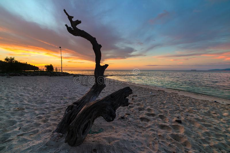 Tropikalny plażowy zmierzch z drzewnym bagażnikiem i romantycznym kolorowym niebem Szeroki kąta strzał, długi ujawnienie, zamazan fotografia stock