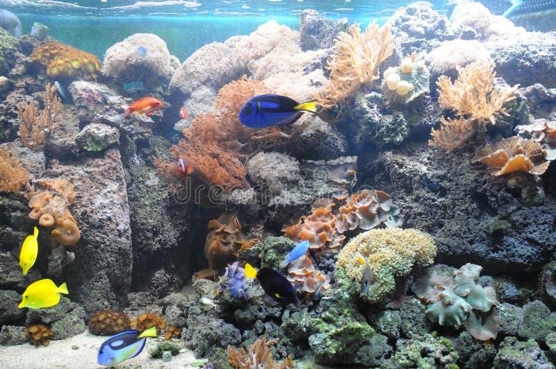 tropikalny rybi zbiornik zdjęcie stock