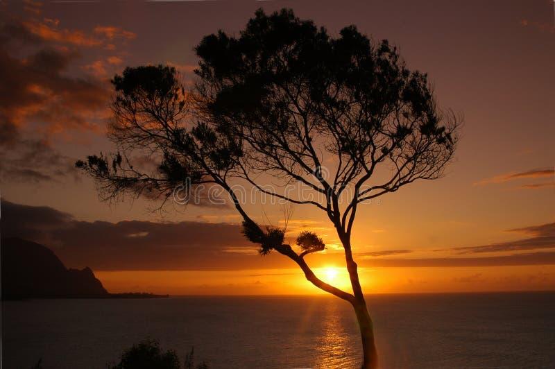 Download Tropikalny słońca zdjęcie stock. Obraz złożonej z ocean - 132642