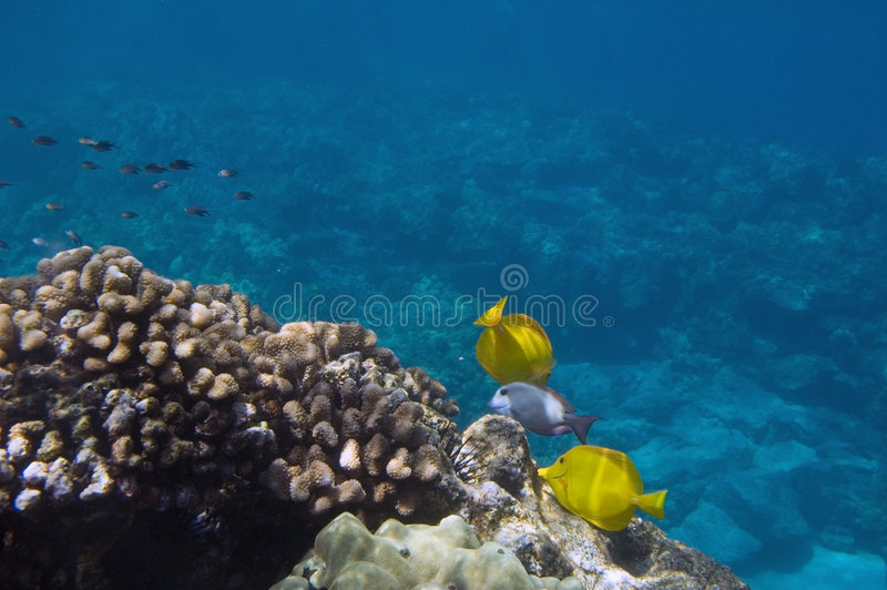 tropikalny sceny pod wodą obraz royalty free