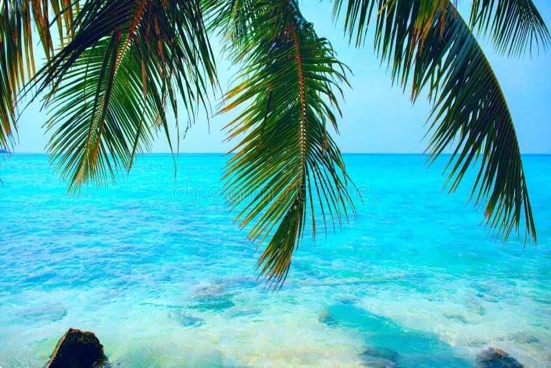 Tropikalny seascape z zielonymi drzewko palmowe liśćmi, widokiem na ocean i obraz stock