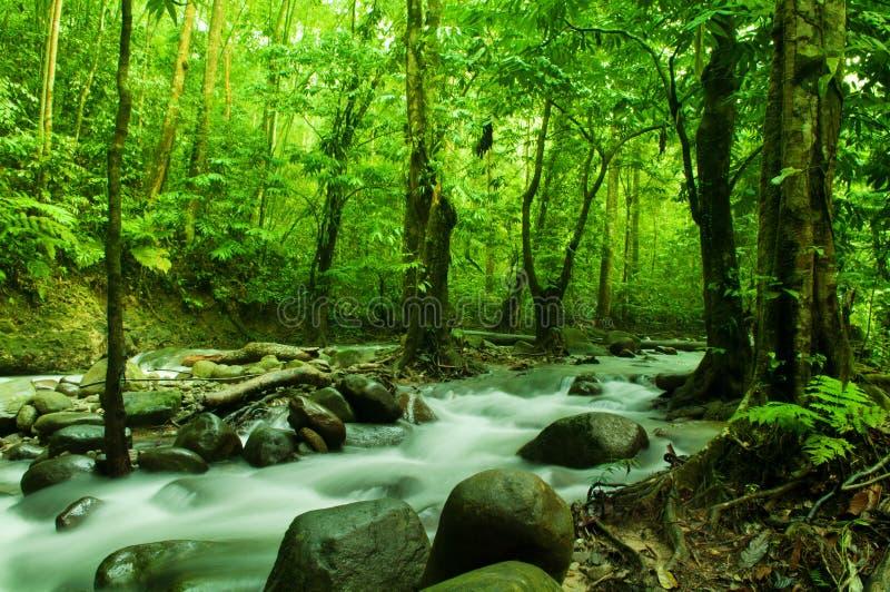 Tropikalny strumienia spływanie zdjęcia stock