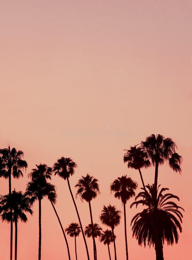 Tropikalny tło wizerunek Z kopii przestrzenią drzewka palmowe Silhouet zdjęcie royalty free