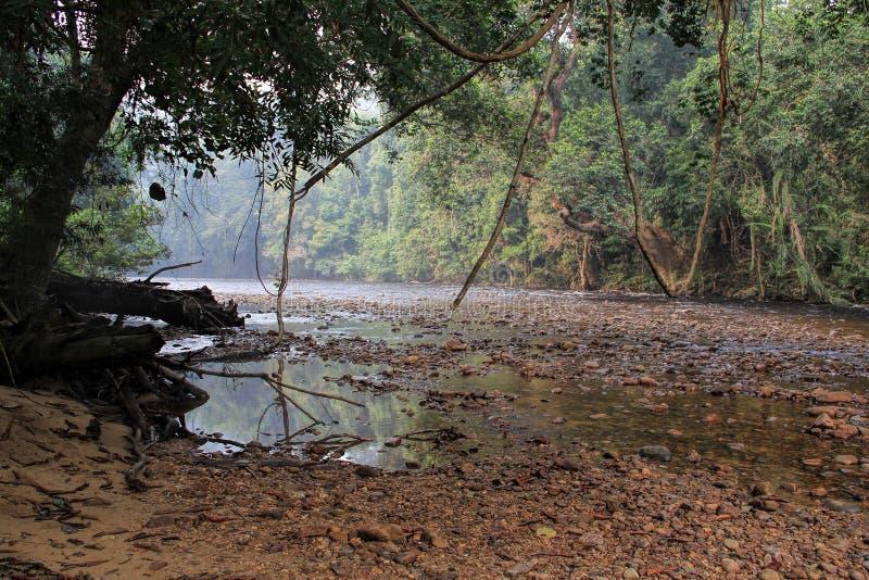 Tropikalny tropikalnego lasu deszczowego krajobraz, Taman Negara Pahang Malezja zdjęcie stock