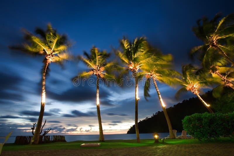 tropikalny wakacje fotografia royalty free