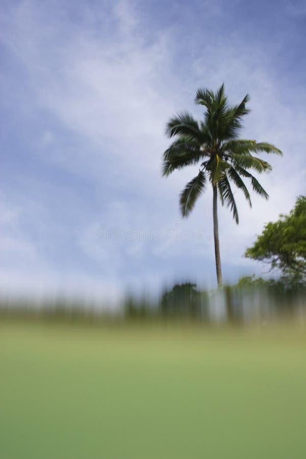 tropikalny widok obraz stock