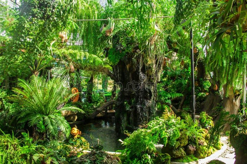 Tropikalny zieleń ogród obrazy royalty free