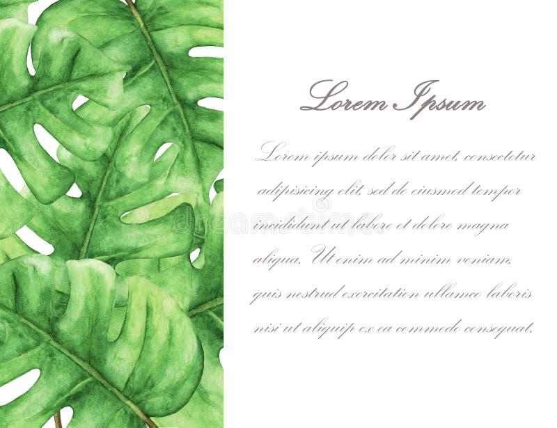 Tropikalny Zielony monstera opuszcza z przestrzenią dla teksta ilustracja wektor