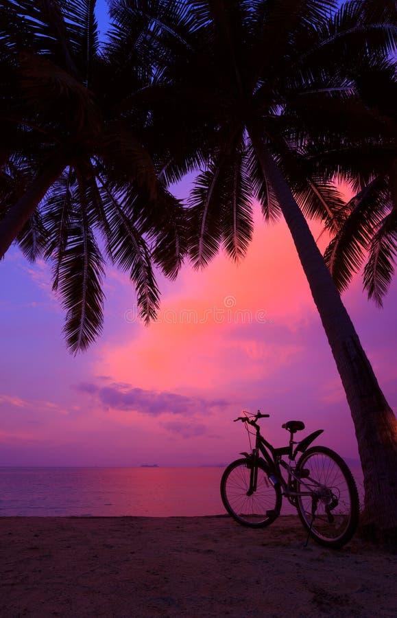 Tropikalny zmierzch z drzewkami palmowymi i bicyklem obrazy stock