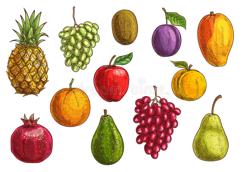 Tropikalnych i egzotycznych owoc odosobnione ikony ilustracja wektor
