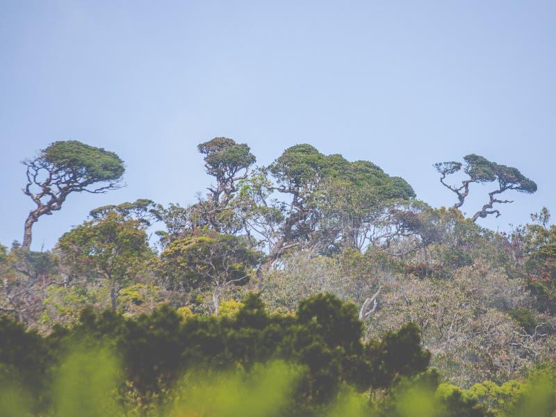 Tropikalnych lasów deszczowych drzewa obrazy stock