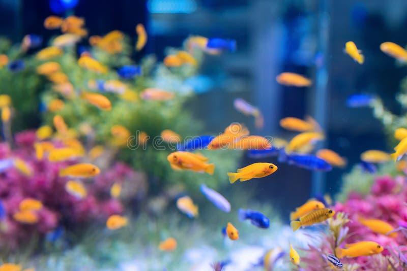 tropikalnych ryb zdjęcie royalty free