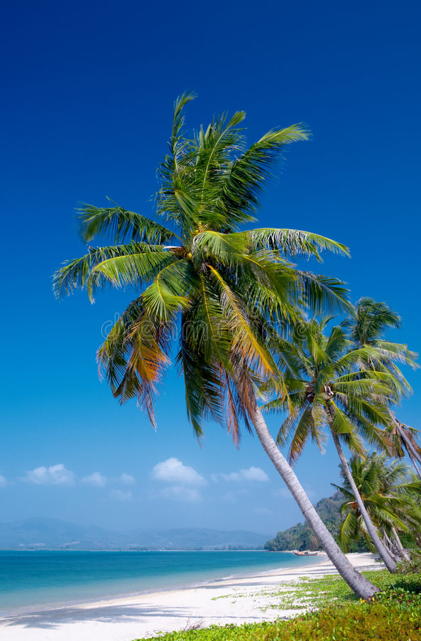 Tropique image libre de droits