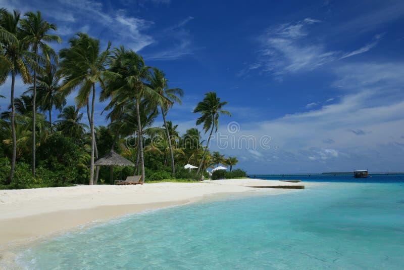 Tropique bleu images libres de droits