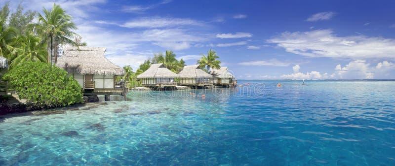 tropiques image libre de droits