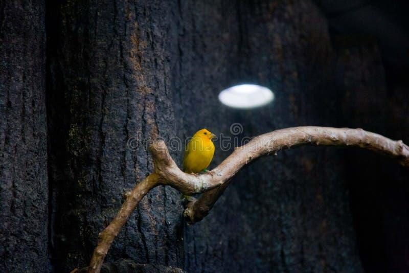 Tropiques d'oiseau Zoo Tokyo Japon d'Ueno photo libre de droits