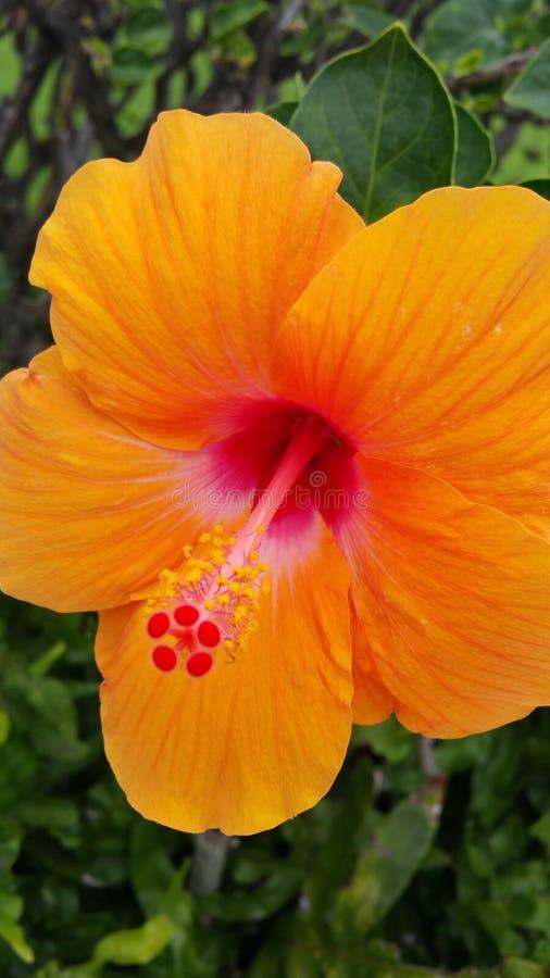 Tropiques oranges photos stock